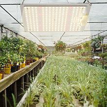 1000W Led Grow Light Panel Full Spectrum for