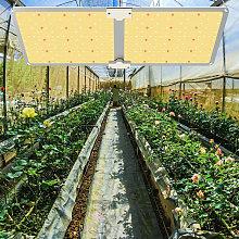2000W Led Grow Light Panel Full Spectrum for