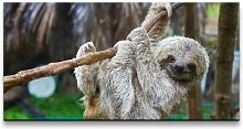 'Baby Sloth' Photograph on Wrapped Canvas