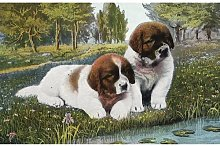 'Color Print Postcard with Two St. Bernard