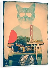 'Cool Cat' Photograph Print on Canvas East