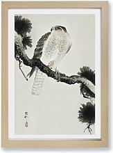 'Hawk on a Pine Branch' by Ohara Koson -