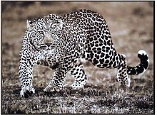'Leopard' Art Print East Urban Home