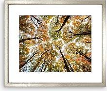 'Look Up' Autumn Trees Wood Framed Print,
