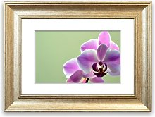 'Orchid 2' Framed Photographic Print East