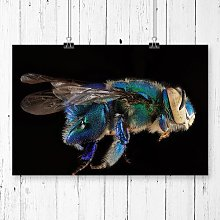 'Orchid Bee Macro' Photographic Print