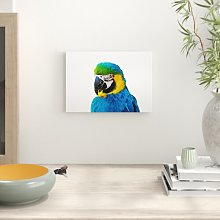 'Parrot' Photographic Print Big Box Art