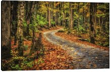 'Path in Greenbrier' by Galloimages Online