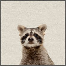 'Shocked Raccoon' Framed Photographic