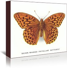 'Silver-Washed Fritillary Butterfly' -