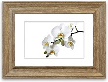 'White Orchid Beauty' Framed Photographic