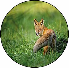 3D Fox Pattern Area Rugs Carpets,4' Round,Fox