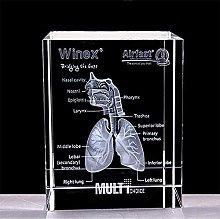 3D Human Respiratory System Heart Anatomy Model
