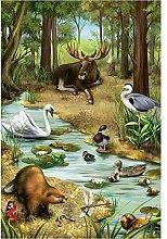 5D Diamond Painting Kits Full Drill Forest Fauna
