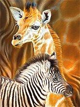 5D DIY Diamond Painting Kits Zebra Full Round