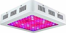 600W/1000W/1200W Full Spectrum Led Grow Light for
