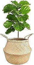 7WUNDERBAR Seagrass Basket Flowerpot Straw Flower