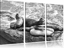 A Group of Sea Lions in a Bay 3 Piece Graphic Art