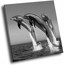 A034 Dolphin Ocean Black White Square Animal