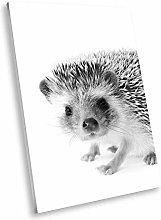 A359 Hedgehog Cute Black White Animal Portrait