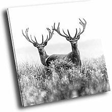 A558 Stags Antlers Black White Square Animal