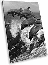 A756 Dolphin Waves Black White Animal Portrait
