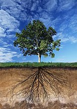 Aawerzhonda Nordic style poster Tree and Root