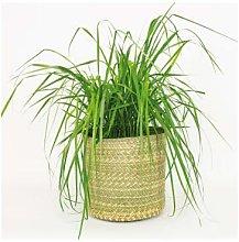 Afroart - Natural Hehe Rund Basket, Large Size - H