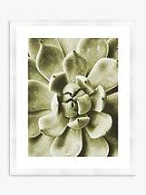 Agave 1 - Framed Print & Mount, 56 x 46cm, Green