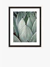 Agave 2 - Framed Print & Mount, 56 x 46cm, Green