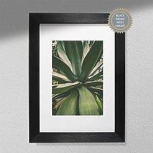 Aloe Vera Print - Plant Photography   Cactus Plant