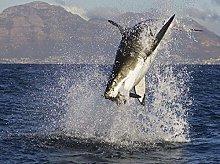 Alpine sea Shark predator-40x50cm,DIY 5D Diamond