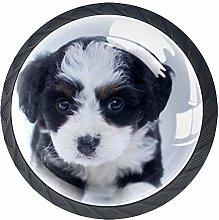 Animal Border Collie Puppy Drawer Knobs 4 Pieces