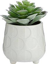 Argos Home Faux Succulent in Ceramic Pot