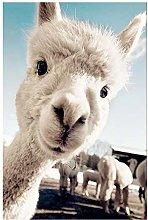 Art Oil Painting Alpaca Poster Animal Print