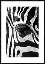 Artesta Framed wall art print Zebra focus ((20x28)