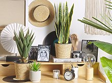 Artificial Potted Aloe Vera Green and Black