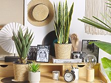 Artificial Potted Snake Plant Green and Black
