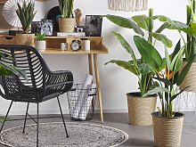 Artificial Potted Strelitzia Tree Green and Black
