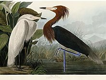 Audubon Birds Purple Heron Painting Art Print
