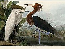 Audubon Birds Purple Heron Painting Premium Wall