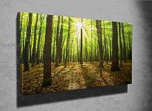 Autumn Forest Trees Photo Canvas Print (22990406)