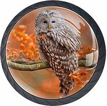 Autumn Ural Owl in Oak Forest Norway Cabinet Door