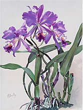 Bailly Cattleya Orchid Flower Watercolor Painting
