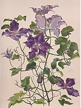 Bailly Vintage Clematis Large Flowers Purple