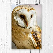 Barn Owl Photographic Print Big Box Art