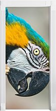 Beautiful Blue-and-Yellow Macaw Door Sticker East