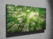 Beautiful Nature at Morning Photo Canvas Print