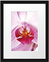 Beautiful Orchid Framed Art Print Poster East