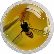 Bee Gather HoneyRound Glass knob White Drawer